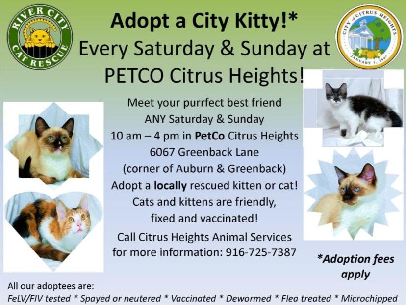 Cat Adoption Events Sacramento
